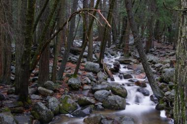 Zpráva o životním prostředí 2016: Více lesů, méně odpadů a stejné znečištění ovzduší