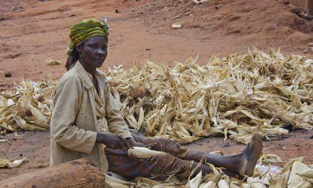 GMO nebo fairtrade? Sledujte etikety, abyste věděli, co kupujete