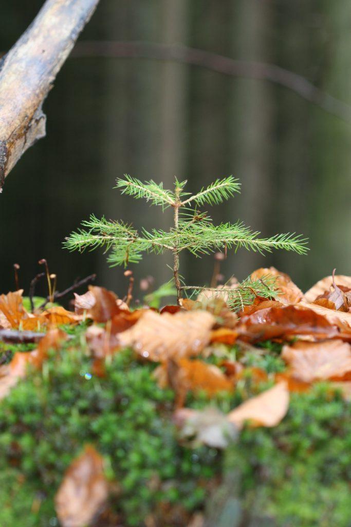Péče o lesy, vysazování stromů